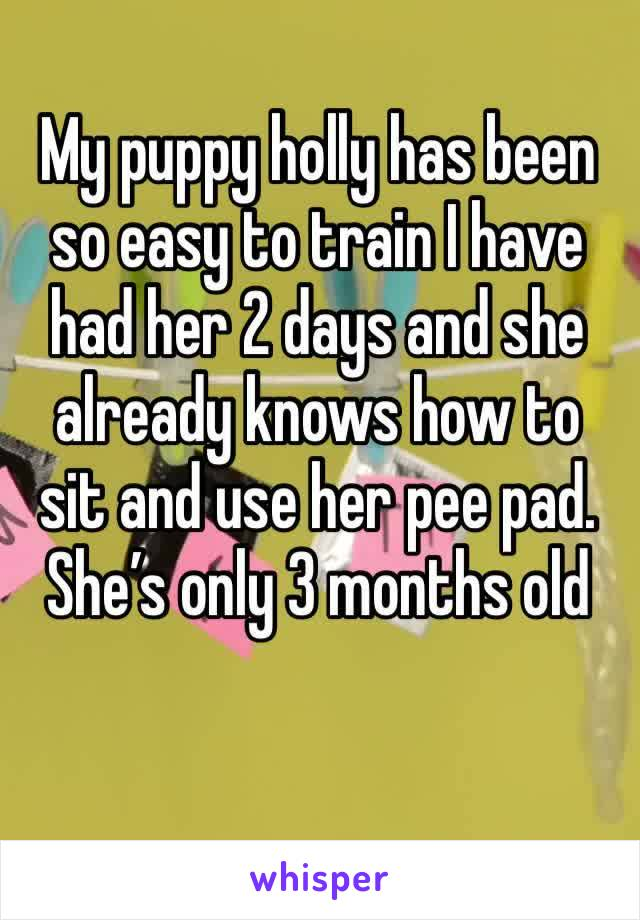 My puppy holly has been so easy to train I have had her 2 days and she already knows how to sit and use her pee pad. She's only 3 months old