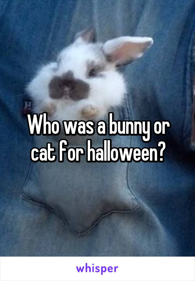 Who was a bunny or cat for halloween?