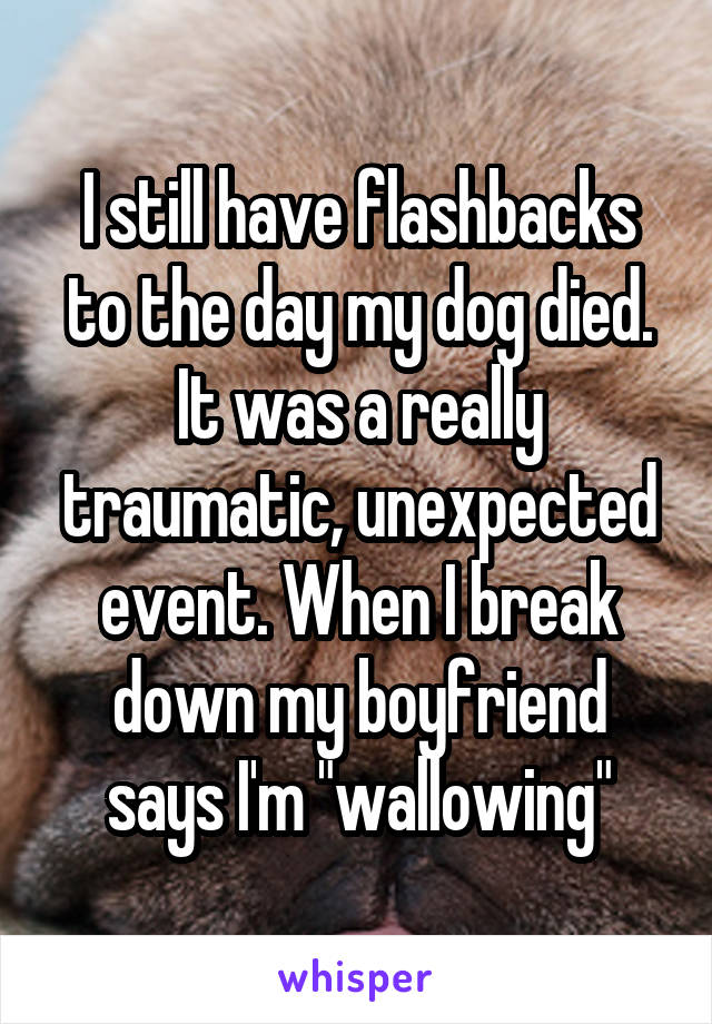 """I still have flashbacks to the day my dog died. It was a really traumatic, unexpected event. When I break down my boyfriend says I'm """"wallowing"""""""