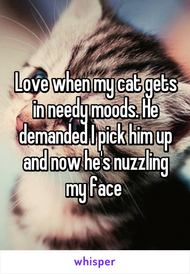 Love when my cat gets in needy moods. He demanded I pick him up and now he's nuzzling my face