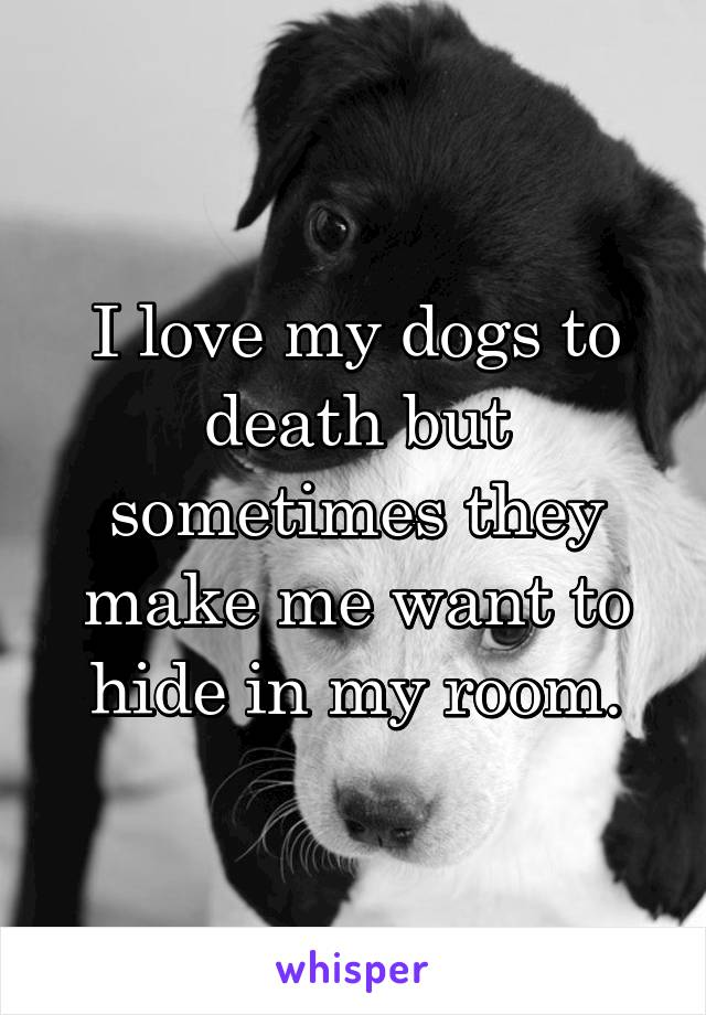 I love my dogs to death but sometimes they make me want to hide in my room.