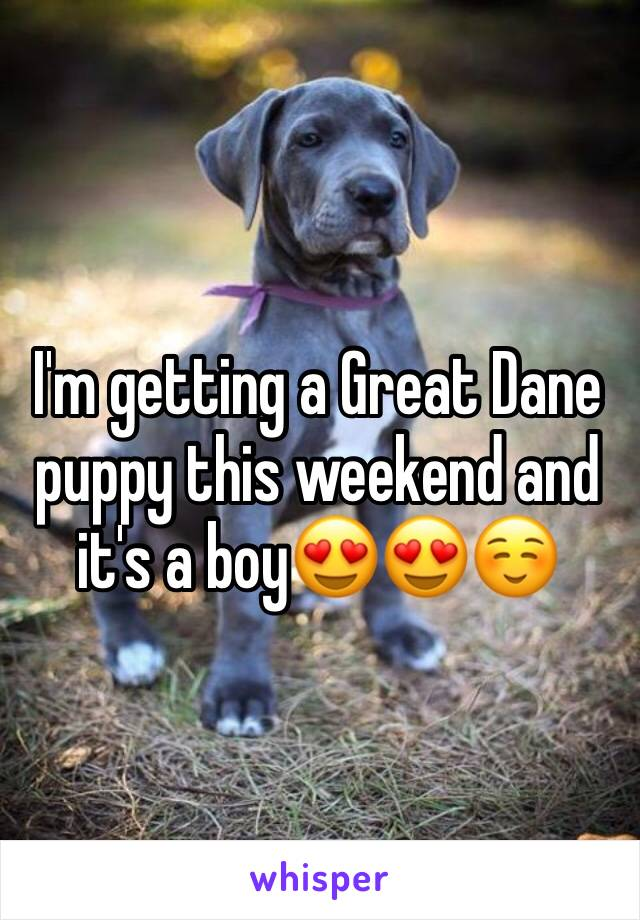 I'm getting a Great Dane puppy this weekend and it's a boy😍😍☺️