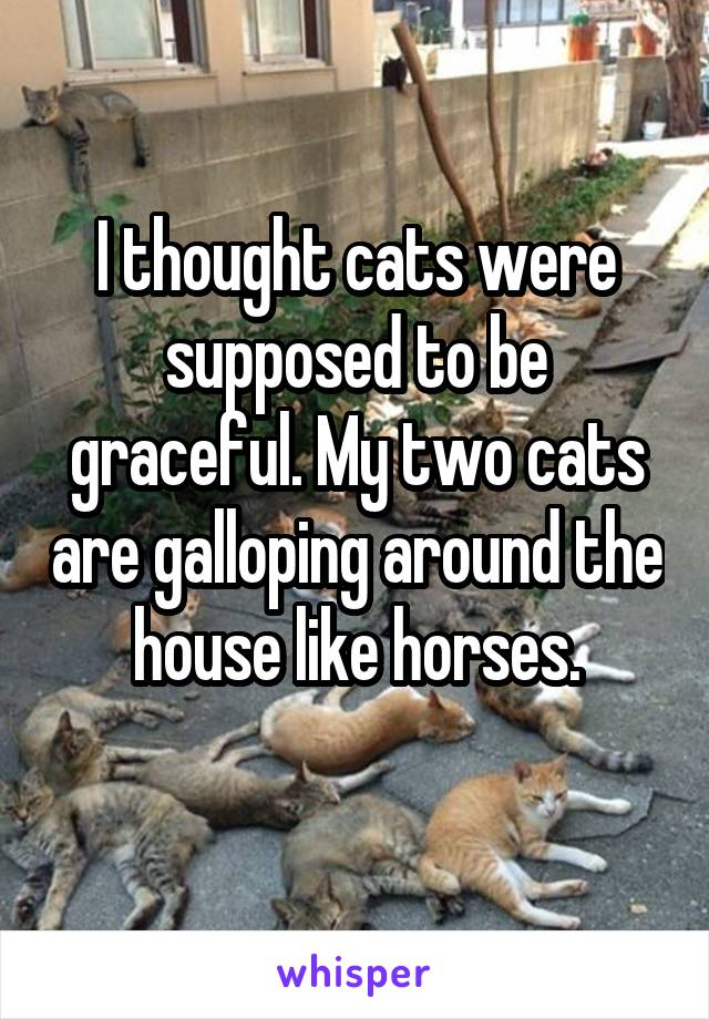 I thought cats were supposed to be graceful. My two cats are galloping around the house like horses.