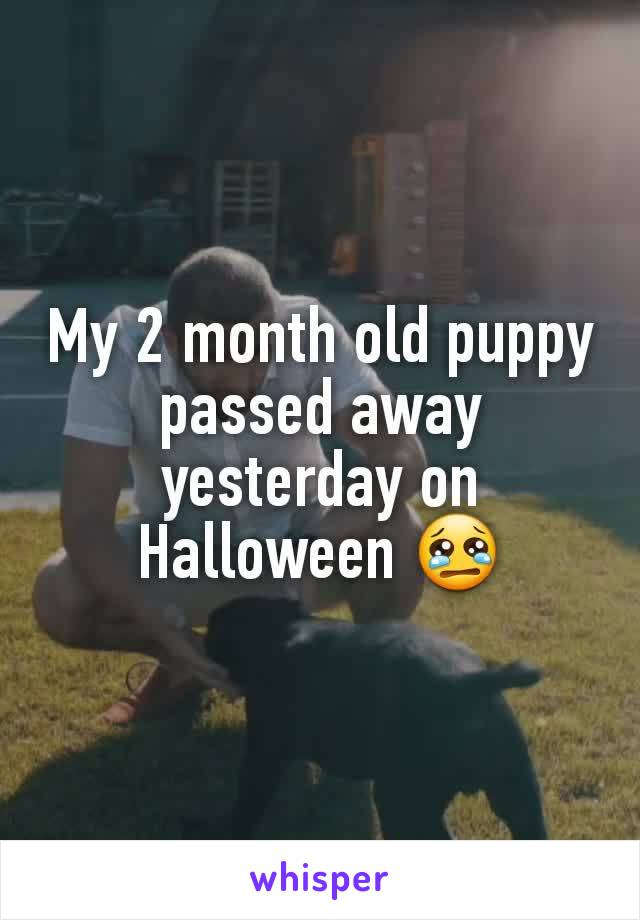 My 2 month old puppy passed away yesterday on Halloween 😢