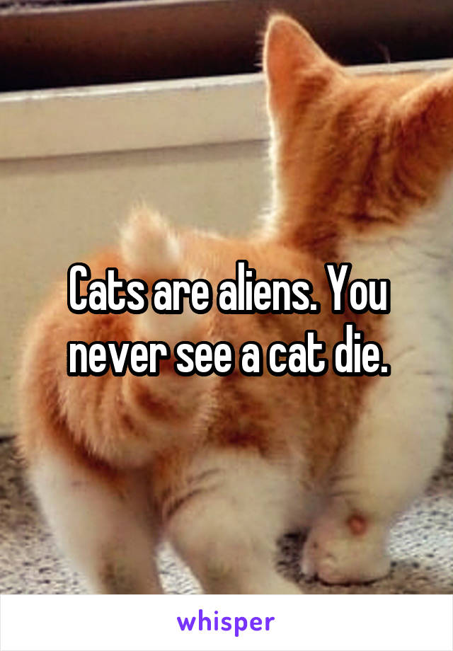 Cats are aliens. You never see a cat die.