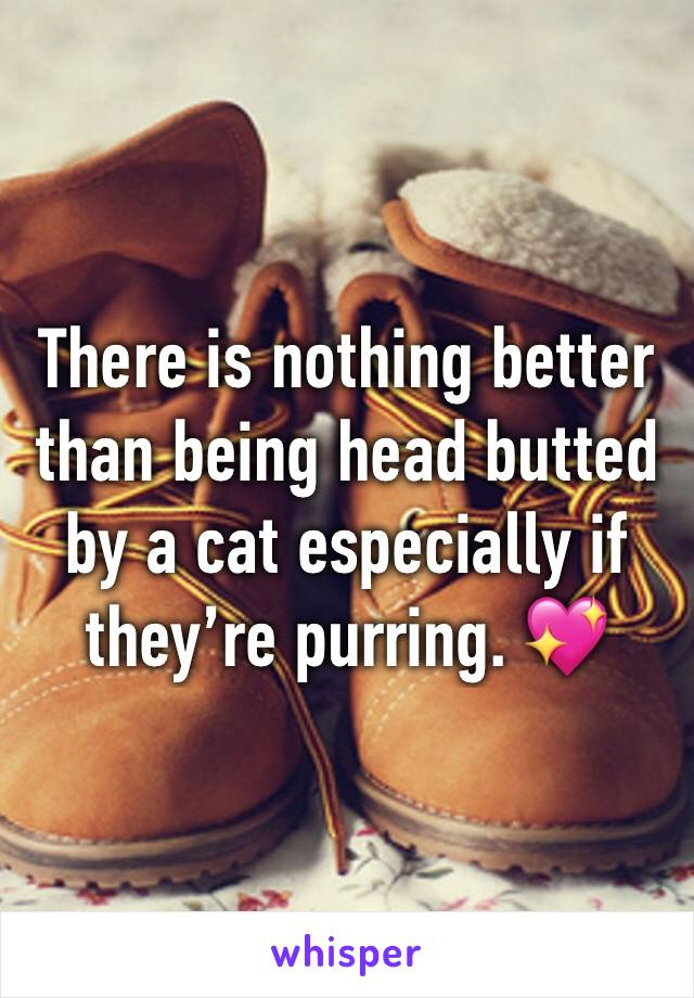 There is nothing better than being head butted by a cat especially if they're purring. 💖