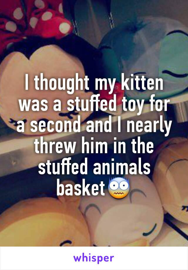 I thought my kitten was a stuffed toy for a second and I nearly threw him in the stuffed animals basket😨