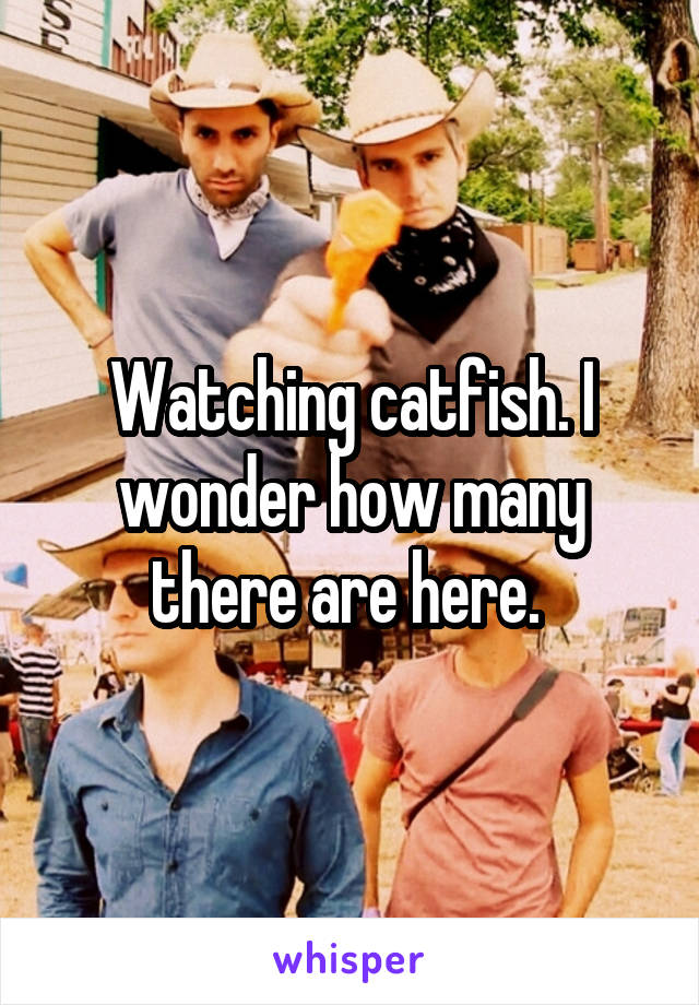 Watching catfish. I wonder how many there are here.