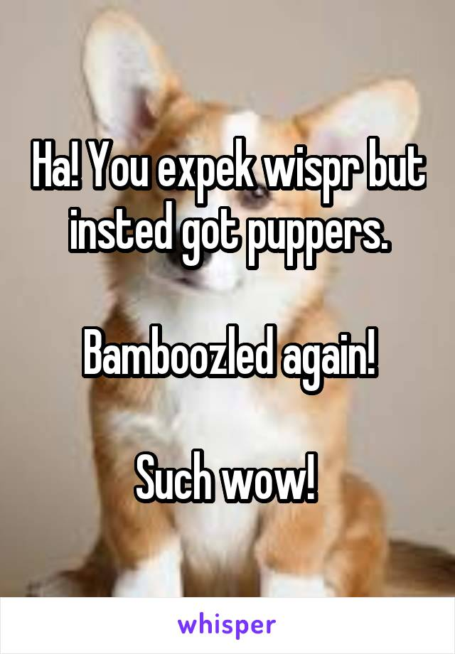Ha! You expek wispr but insted got puppers.  Bamboozled again!  Such wow!