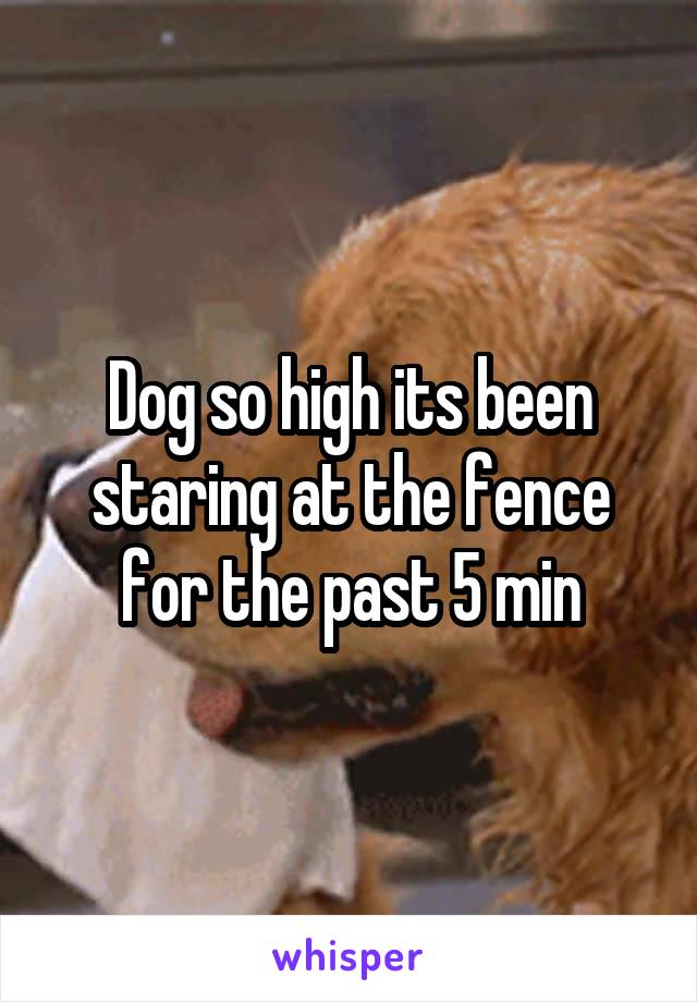 Dog so high its been staring at the fence for the past 5 min