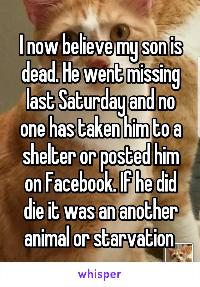 I now believe my son is dead. He went missing last Saturday and no one has taken him to a shelter or posted him on Facebook. If he did die it was an another animal or starvation