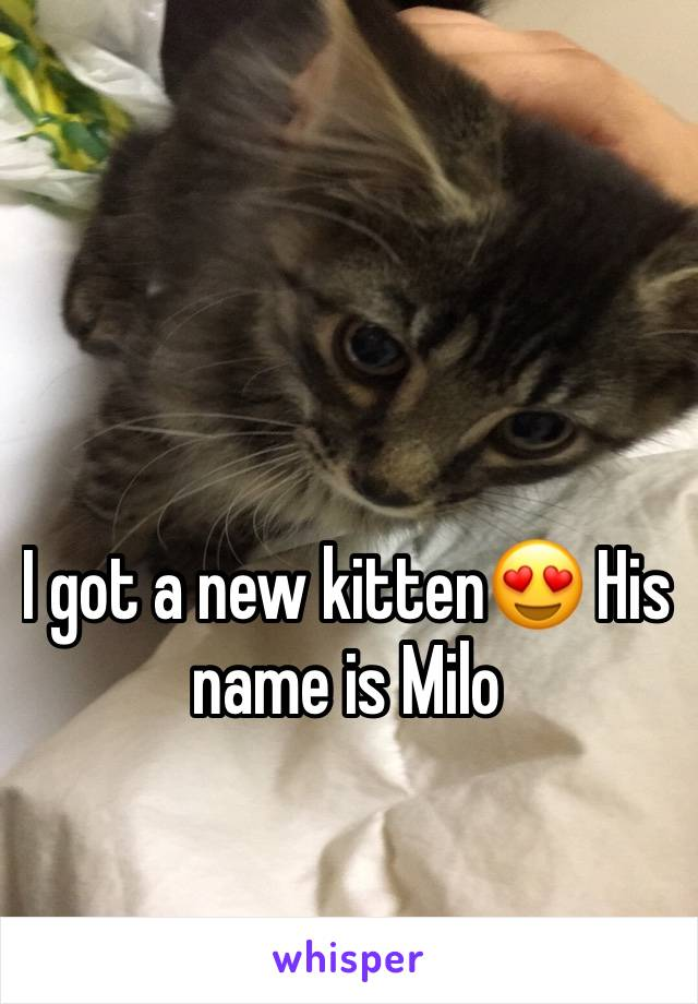 I got a new kitten😍 His name is Milo