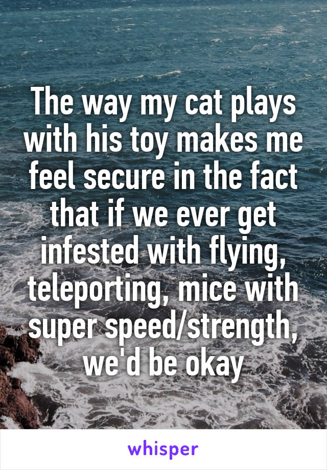 The way my cat plays with his toy makes me feel secure in the fact that if we ever get infested with flying, teleporting, mice with super speed/strength, we'd be okay