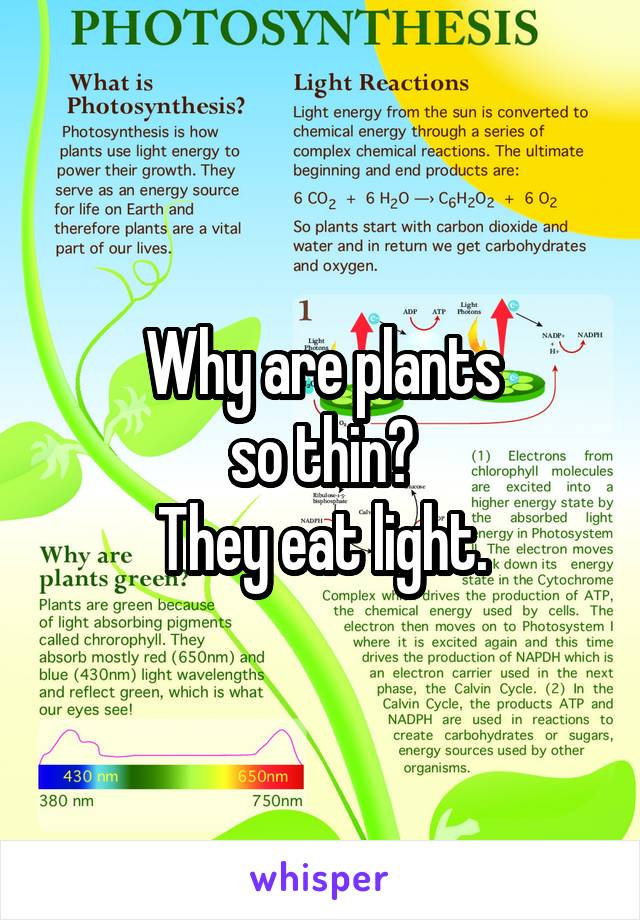 Why are plants so thin? They eat light.