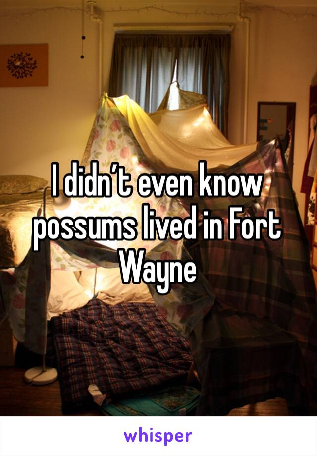 I didn't even know possums lived in Fort Wayne