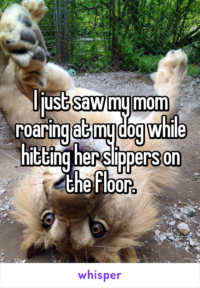 I just saw my mom roaring at my dog while hitting her slippers on the floor.