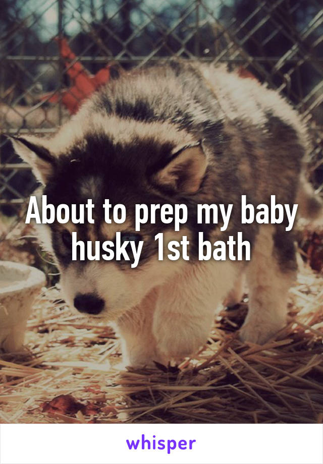 About to prep my baby husky 1st bath
