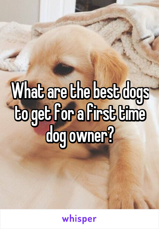 What are the best dogs to get for a first time dog owner?