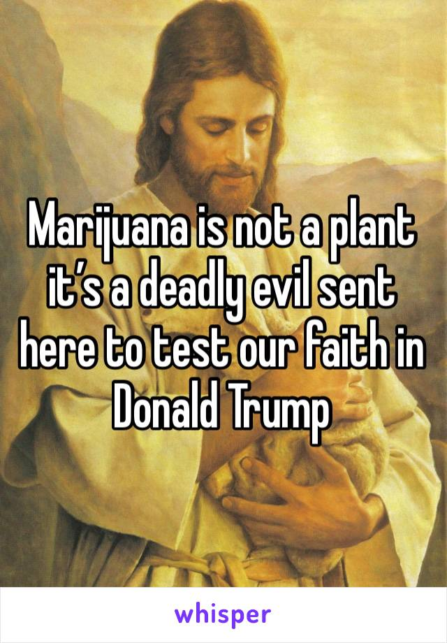 Marijuana is not a plant it's a deadly evil sent here to test our faith in Donald Trump