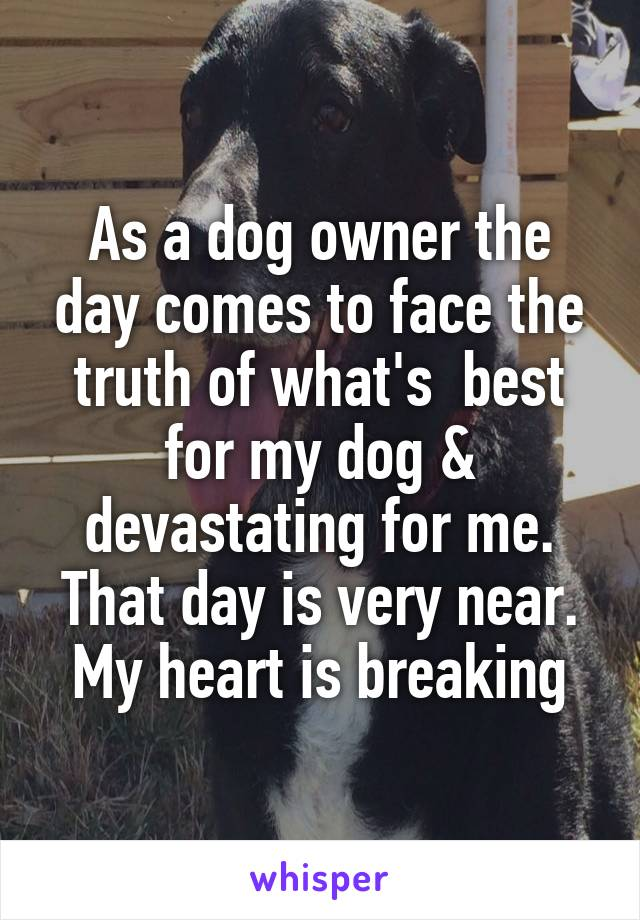 As a dog owner the day comes to face the truth of what's  best for my dog & devastating for me. That day is very near. My heart is breaking