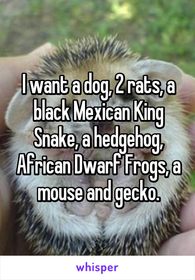 I want a dog, 2 rats, a black Mexican King Snake, a hedgehog, African Dwarf Frogs, a mouse and gecko.