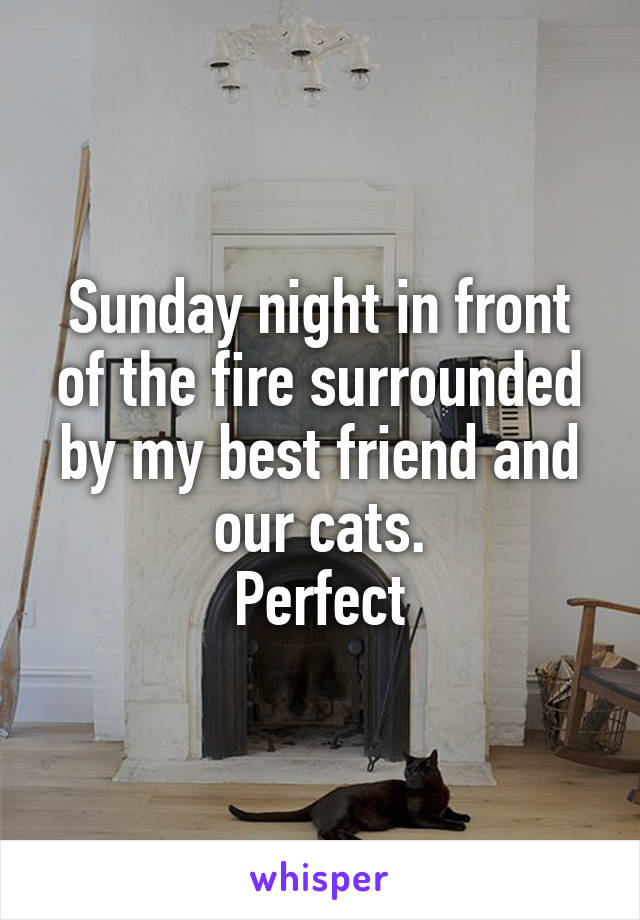 Sunday night in front of the fire surrounded by my best friend and our cats. Perfect
