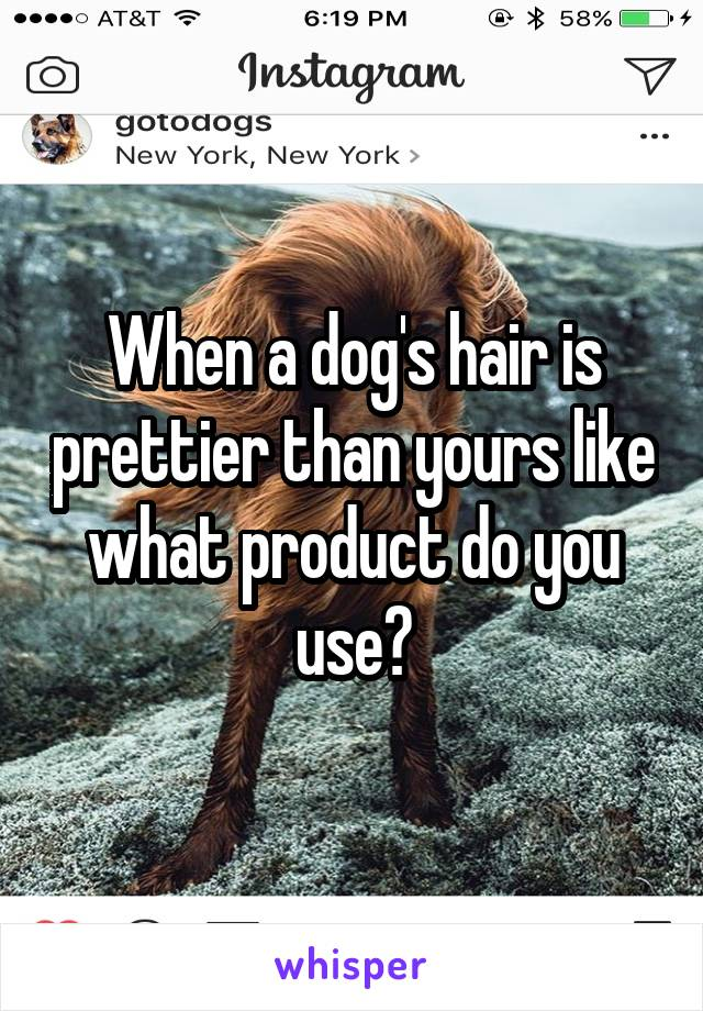 When a dog's hair is prettier than yours like what product do you use?
