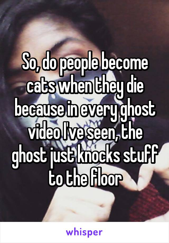 So, do people become cats when they die because in every ghost video I've seen, the ghost just knocks stuff to the floor