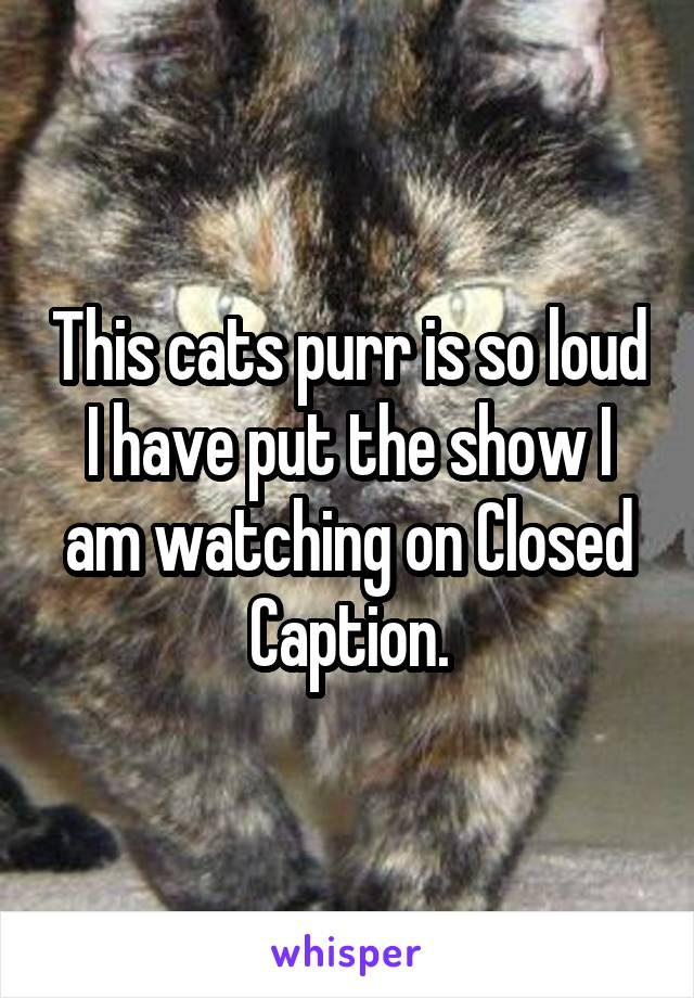 This cats purr is so loud I have put the show I am watching on Closed Caption.