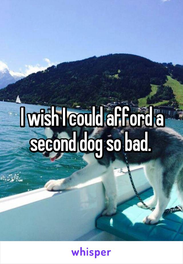 I wish I could afford a second dog so bad.