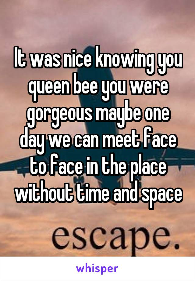 It was nice knowing you queen bee you were gorgeous maybe one day we can meet face to face in the place without time and space