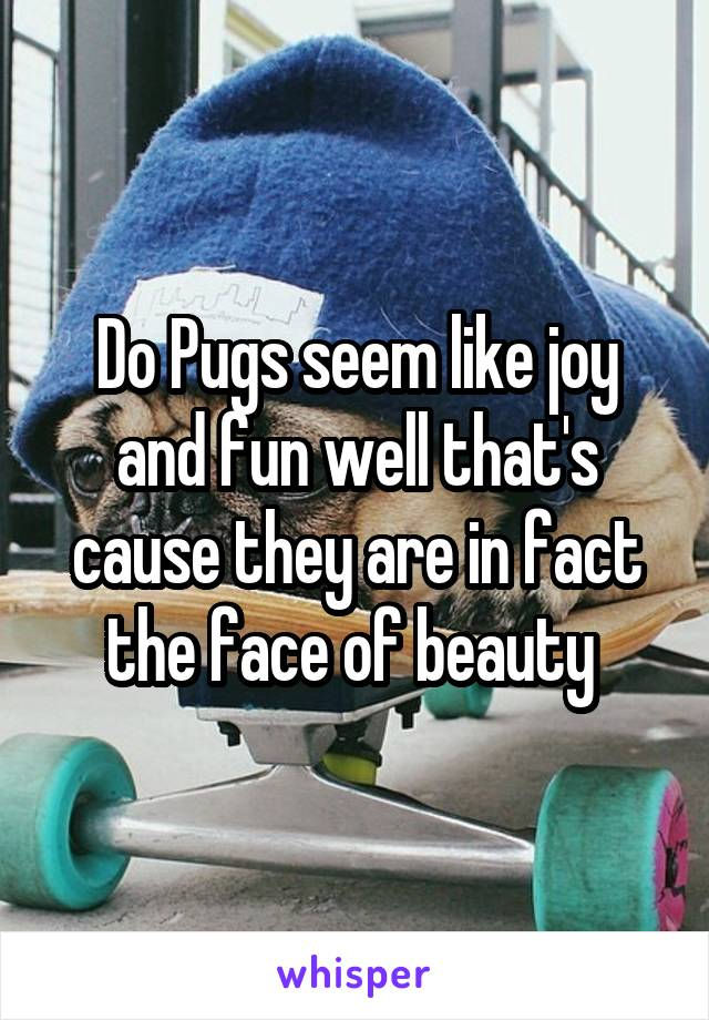 Do Pugs seem like joy and fun well that's cause they are in fact the face of beauty