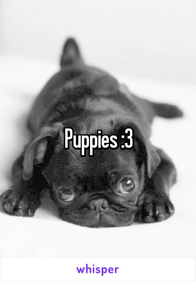 Puppies :3