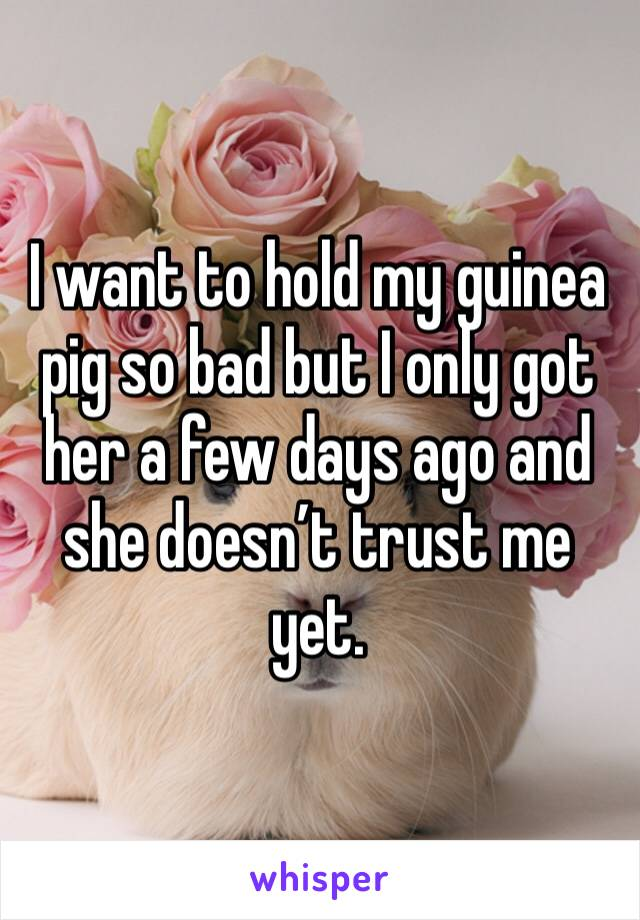 I want to hold my guinea pig so bad but I only got her a few days ago and she doesn't trust me yet.