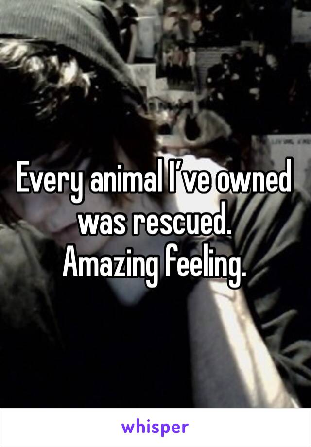 Every animal I've owned was rescued.  Amazing feeling.