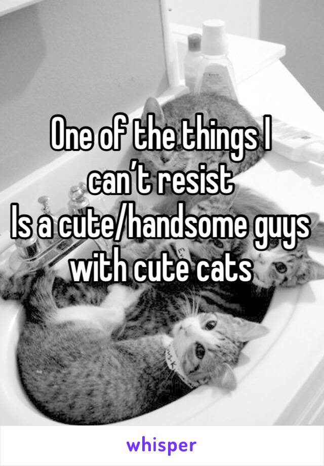 One of the things I can't resist  Is a cute/handsome guys with cute cats