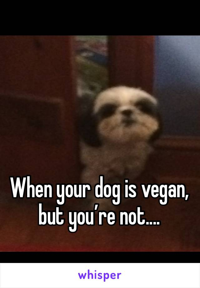 When your dog is vegan, but you're not....