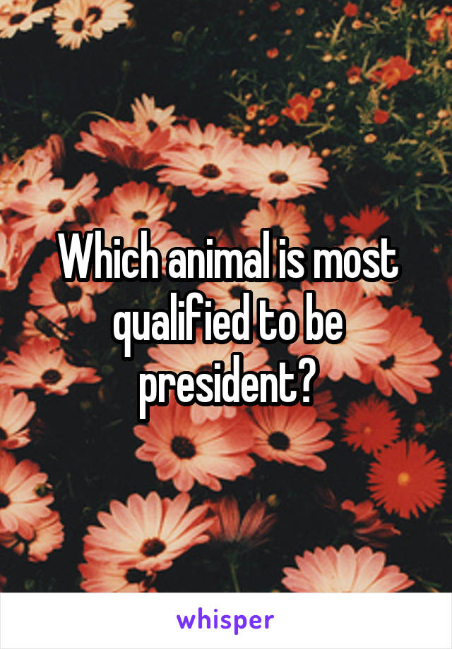 Which animal is most qualified to be president?