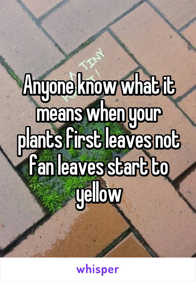 Anyone know what it means when your plants first leaves not fan leaves start to yellow