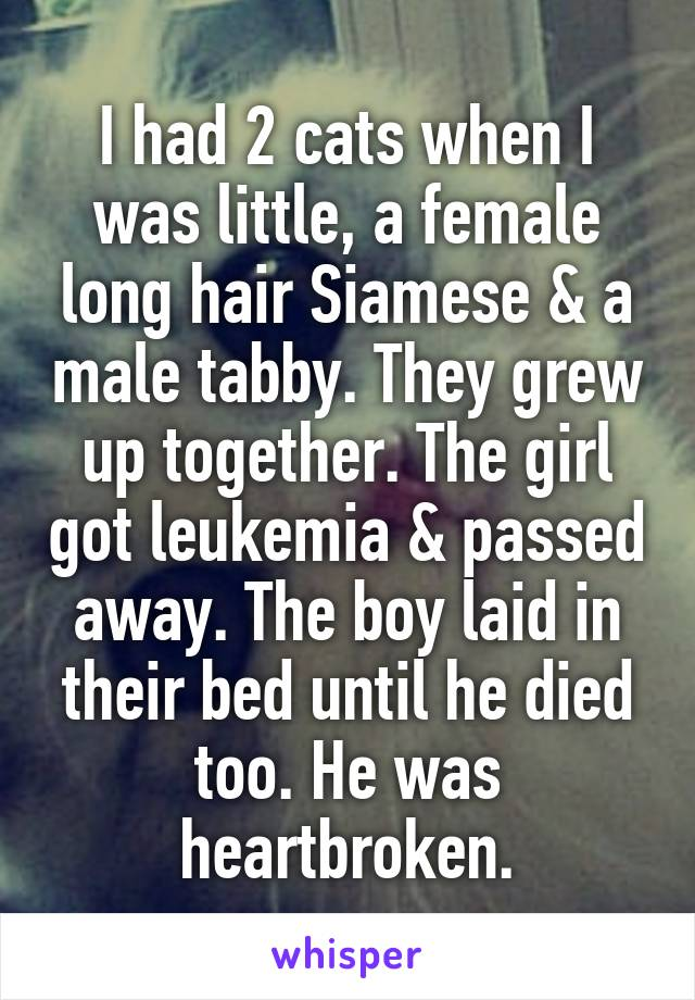 I had 2 cats when I was little, a female long hair Siamese & a male tabby. They grew up together. The girl got leukemia & passed away. The boy laid in their bed until he died too. He was heartbroken.