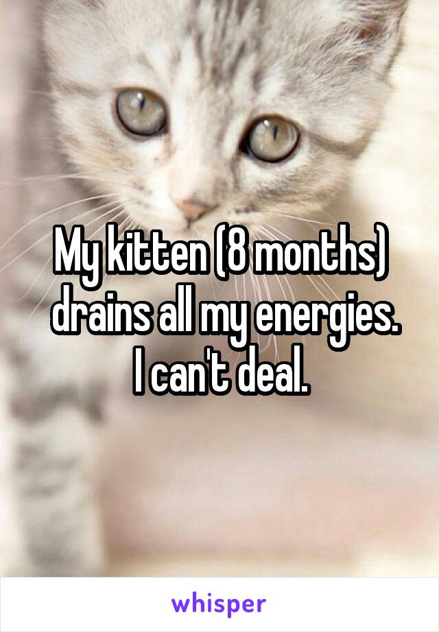 My kitten (8 months)  drains all my energies. I can't deal.