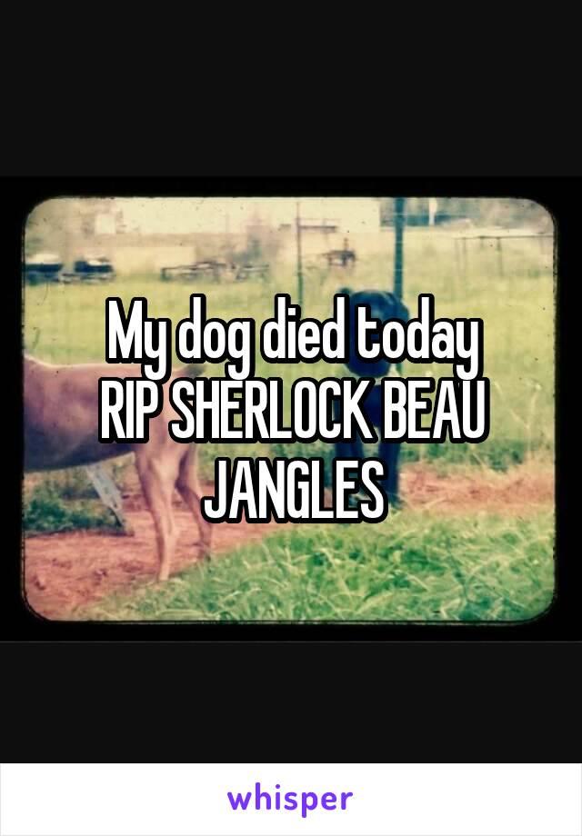 My dog died today RIP SHERLOCK BEAU JANGLES