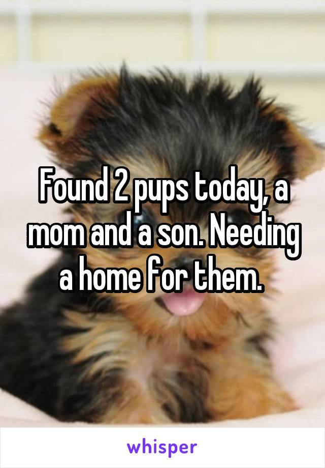Found 2 pups today, a mom and a son. Needing a home for them.