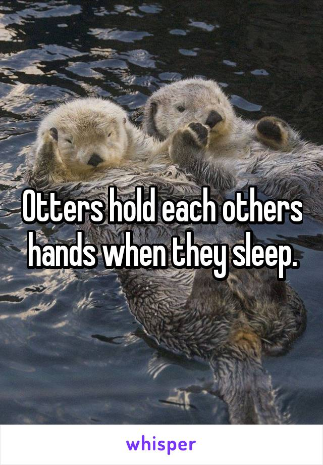Otters hold each others hands when they sleep.