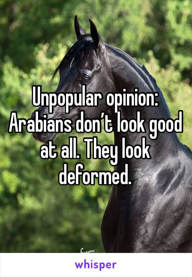 Unpopular opinion: Arabians don't look good at all. They look deformed.