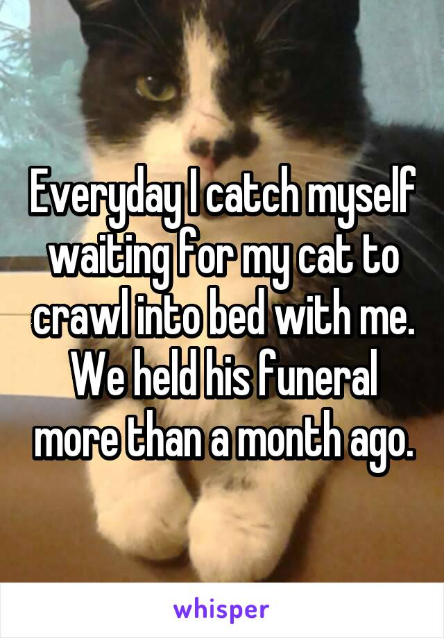 Everyday I catch myself waiting for my cat to crawl into bed with me. We held his funeral more than a month ago.