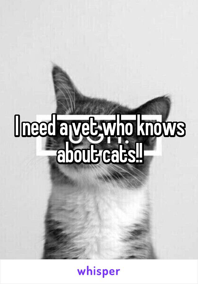I need a vet who knows about cats!!