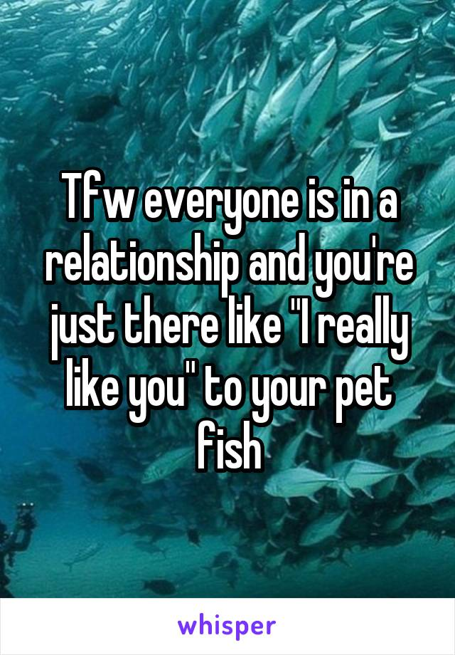 "Tfw everyone is in a relationship and you're just there like ""I really like you"" to your pet fish"