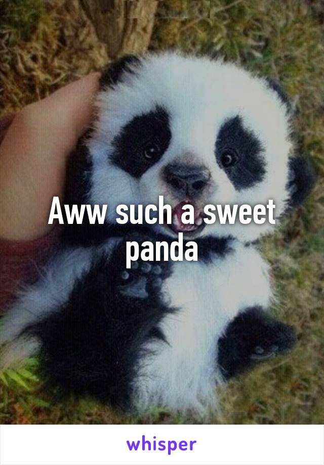 Aww such a sweet panda