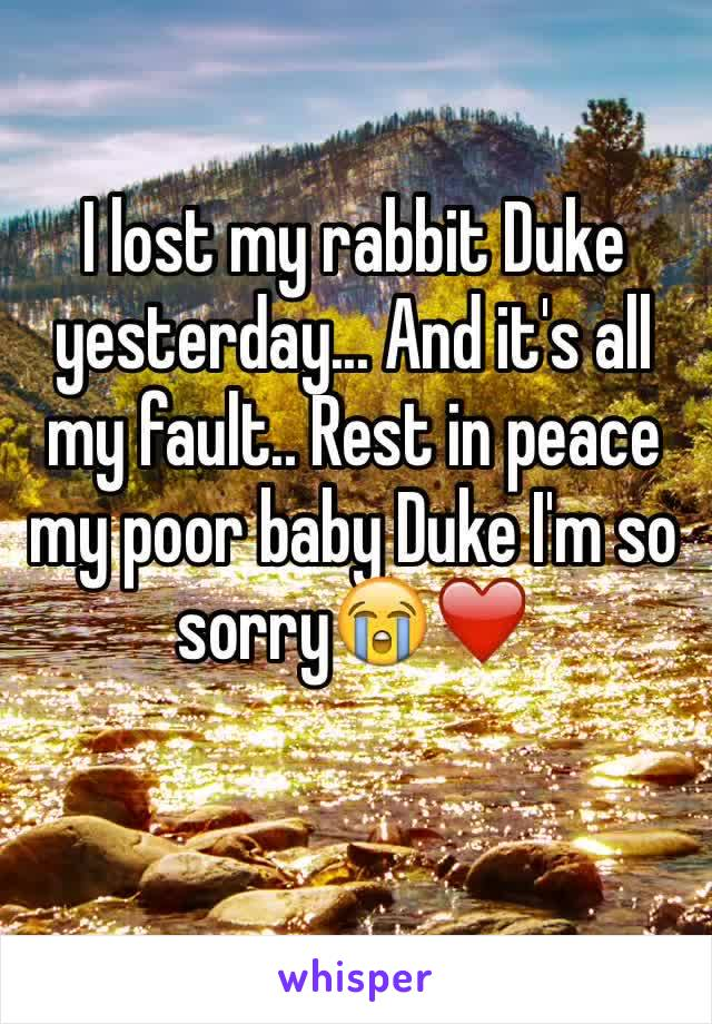 I lost my rabbit Duke yesterday... And it's all my fault.. Rest in peace my poor baby Duke I'm so sorry😭❤️